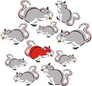 Keine graue Maus als Unternehmer