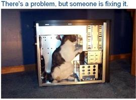Auch Katzen müssen arbeiten